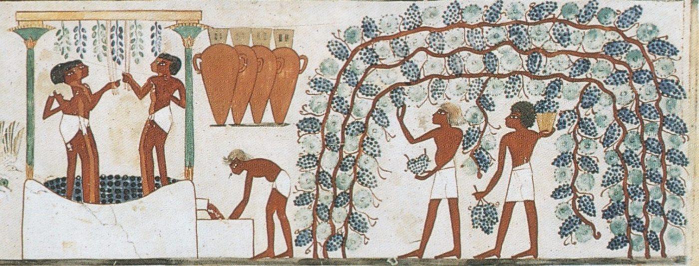 vino egipto