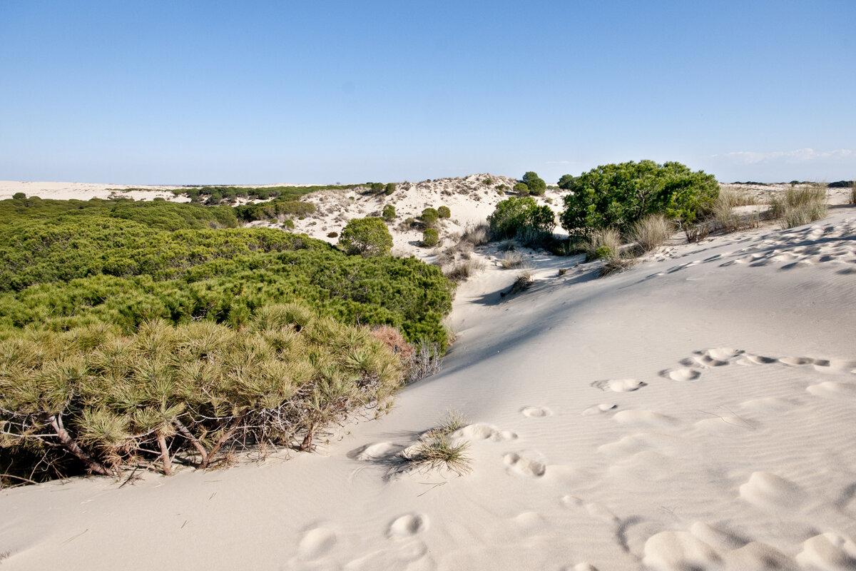 Patrimonio de la Humanidad en España: Doñana